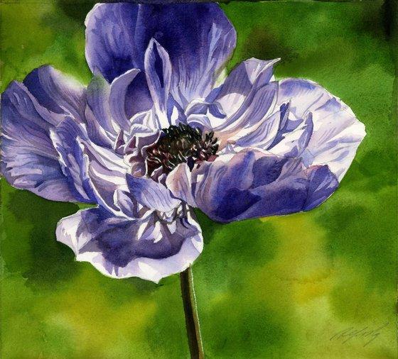blue anemone watercolor floral