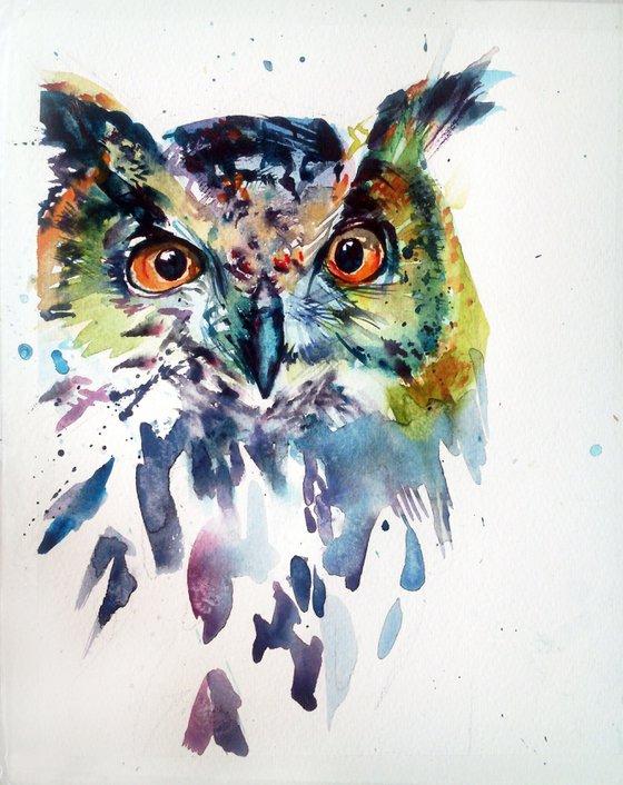 Owl, awareness