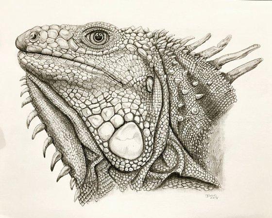 Ed the Iguana