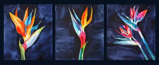Strelitzia on blue-black velvet, triptych - set of 3 original artwork