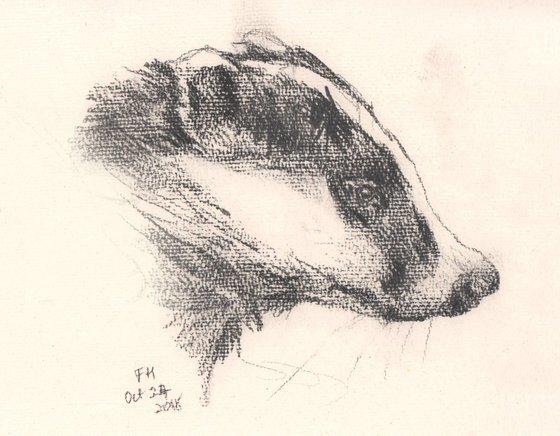 Badger Emerging - original pencil portrait