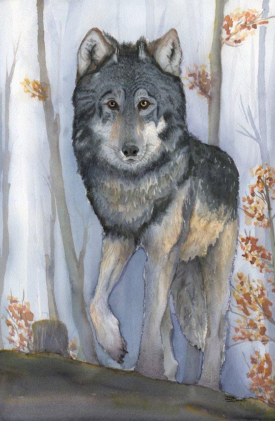 Woodland Encounter - Grey Wolf