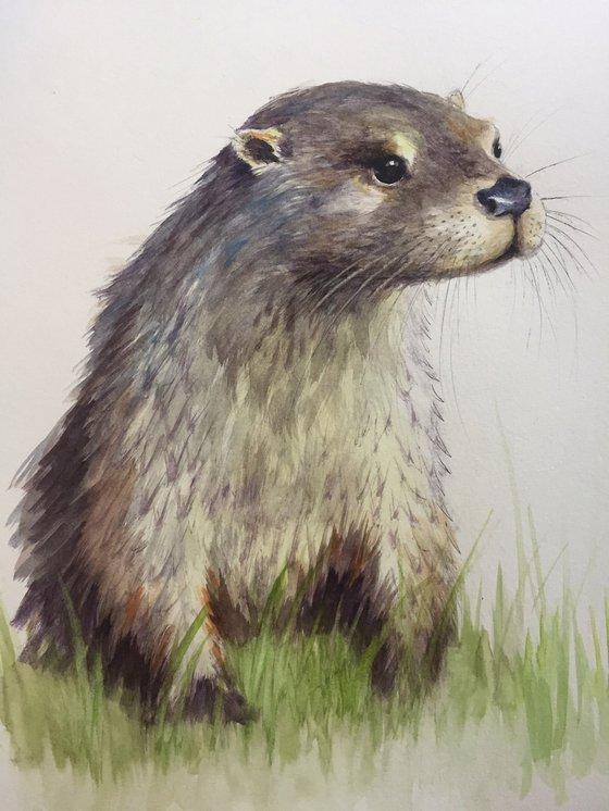 Scottish Otter