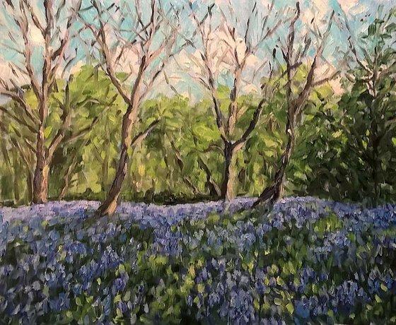 bluebell wood V