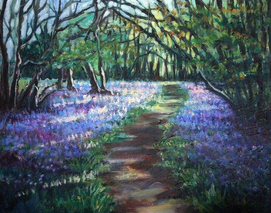 Knott Wood, Hertfordshire