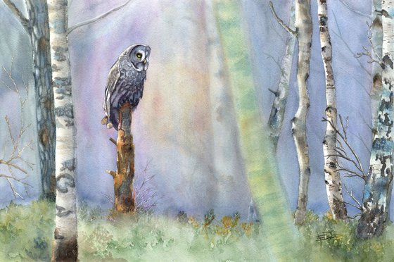 Among The Birch - Great Grey Owl
