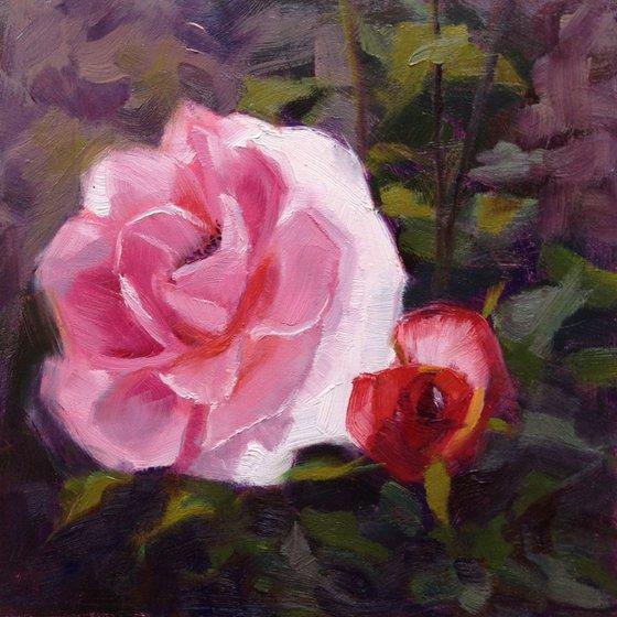 Singing Rose