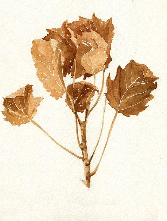 Populus leaves