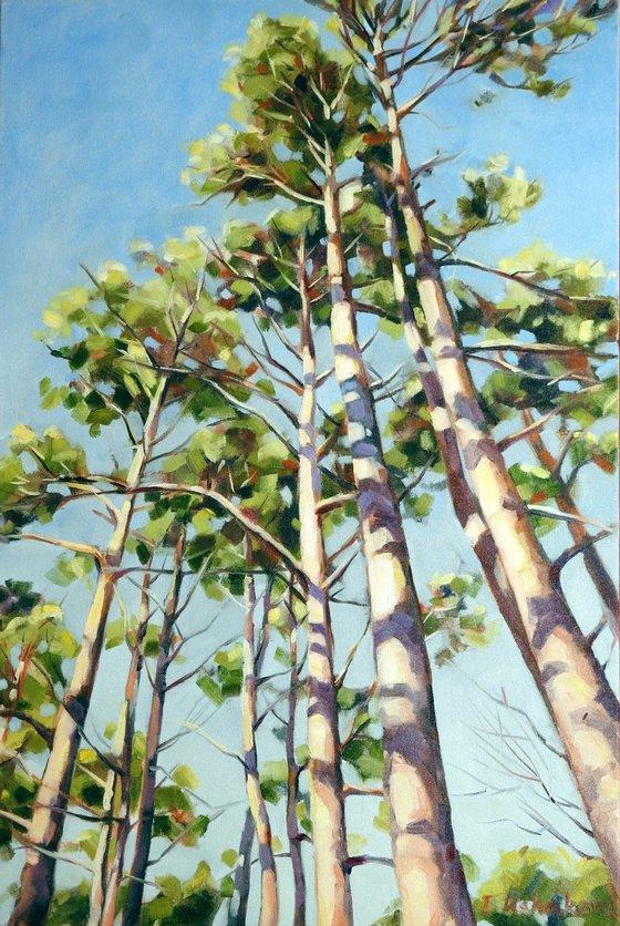 Pines SALE