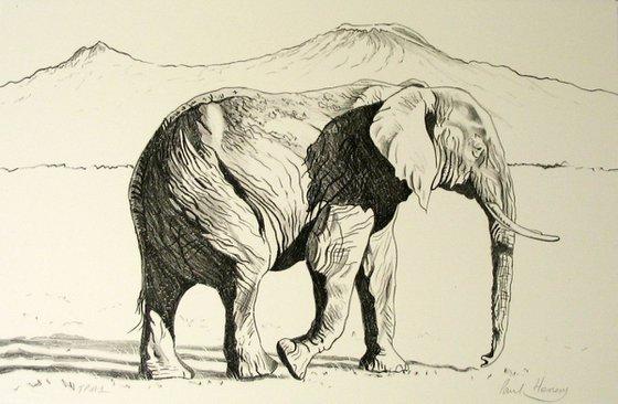 African Elephant, Mount Kilimanjaro