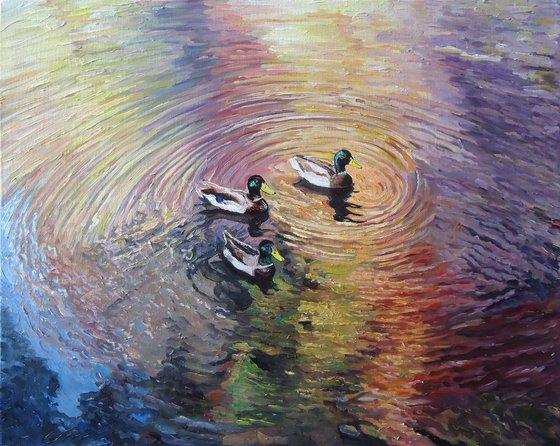 Ducks (rainbow study)