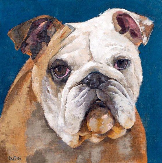 British Bulldog Against a Blue Background