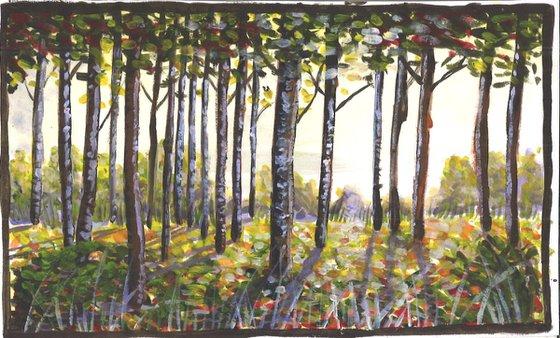 Birch Trees at Dawn