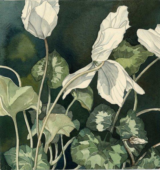 cyclamen in white watercolor