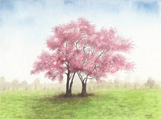 Cherry Blossom Trees Watercolour Painting