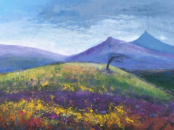 Wild And Free On Dartmoor