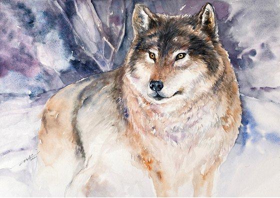 Gray Wolf Zoltan