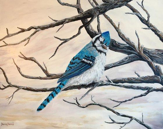 Sassy Blue Jay