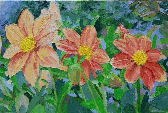Dahlias flowers 20 X 35 cm