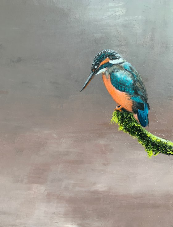 Kylie the Kingfisher