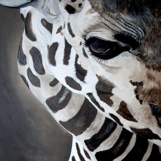 eye of giraffe