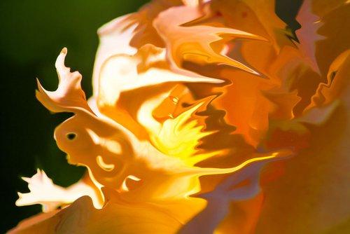 Orange and yellow Shades