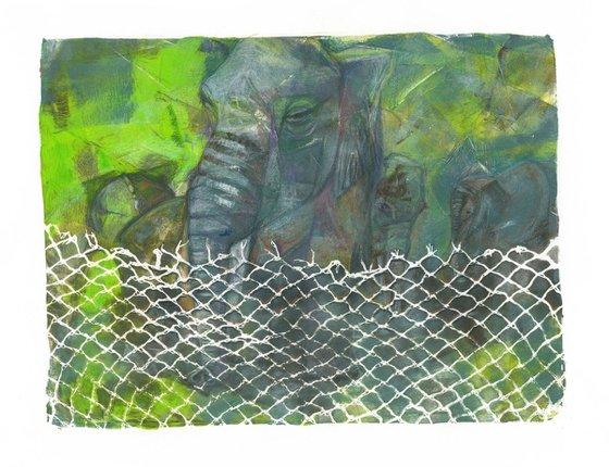 ZOO 3 - Elephant Frits