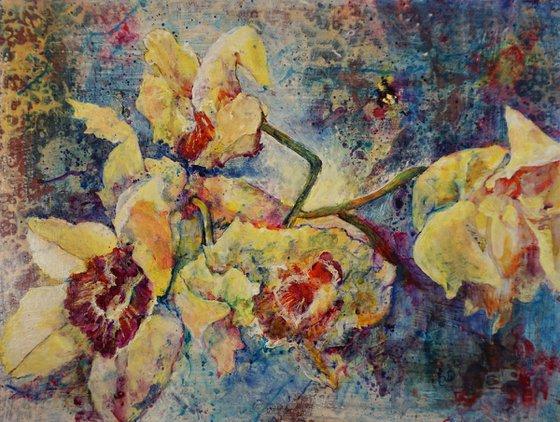 Orchidea Blues