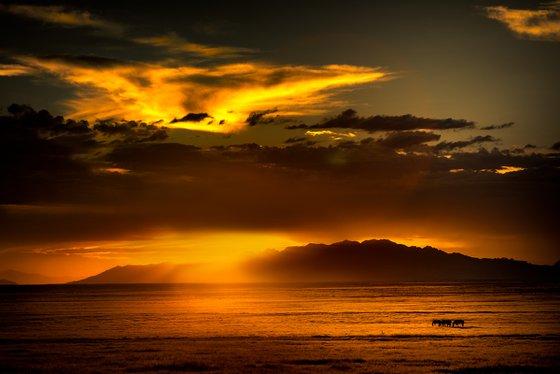 Onaqui Wild Horses at Sunset