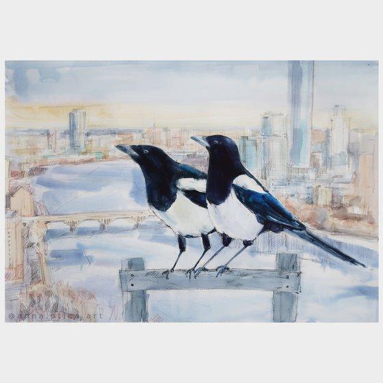 Birds Magpies Couple