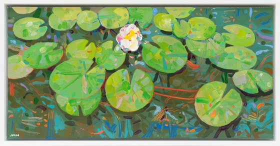 Tasman Lily Pond 48