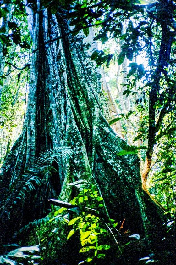The Amazon Jungle, Peru, Ayahuasca