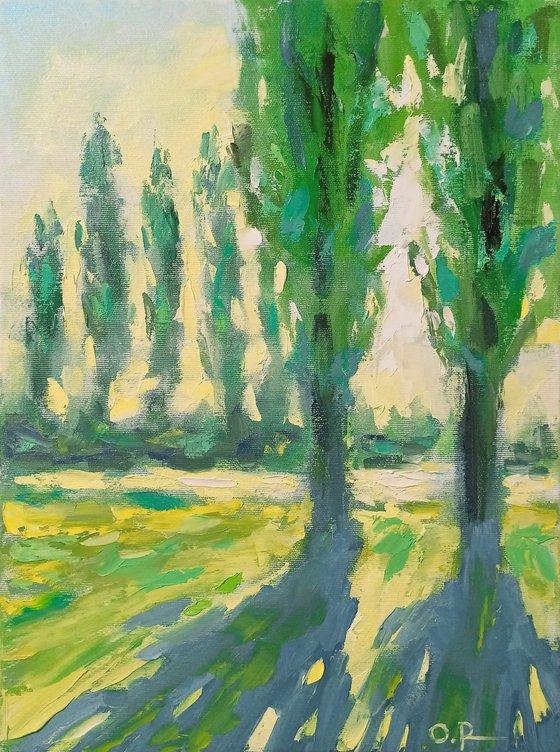 Sun in poplars 3