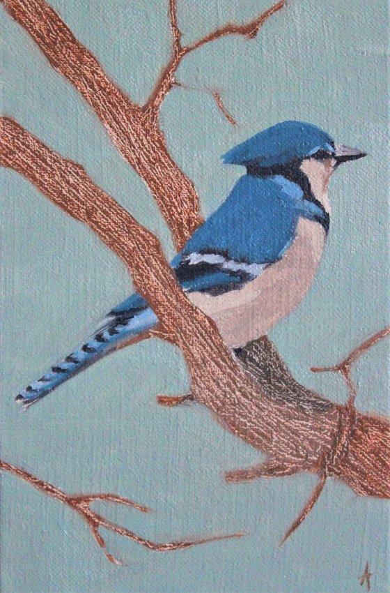 Song birds - Blue Jay
