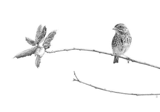 "Original graphite pencils drawing bird ""Savannah Sparrow"""