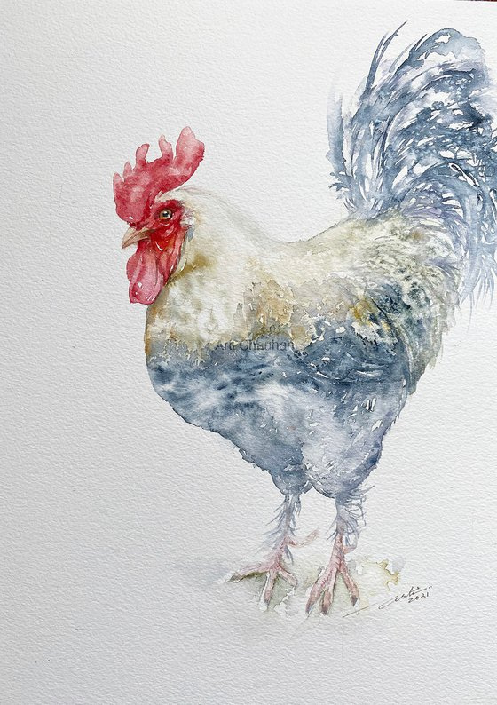 White Rooster Remo