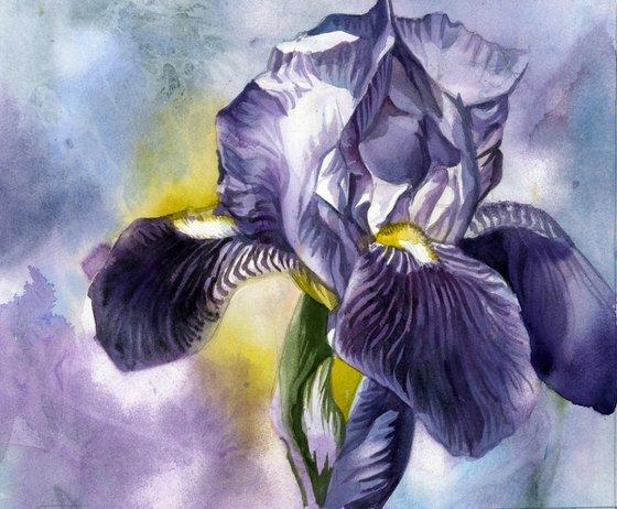 blue iris watercolor floral