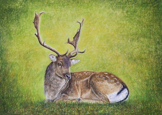 """Original pastel drawing """"Fallow deer"""""""
