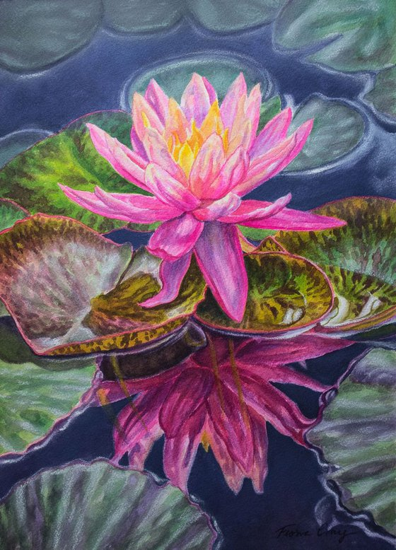 Water Lilies 17
