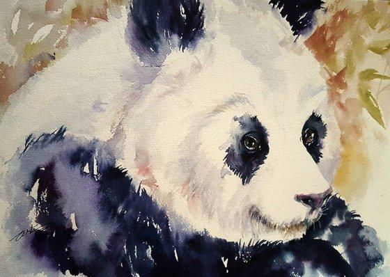 Dudley the Panda