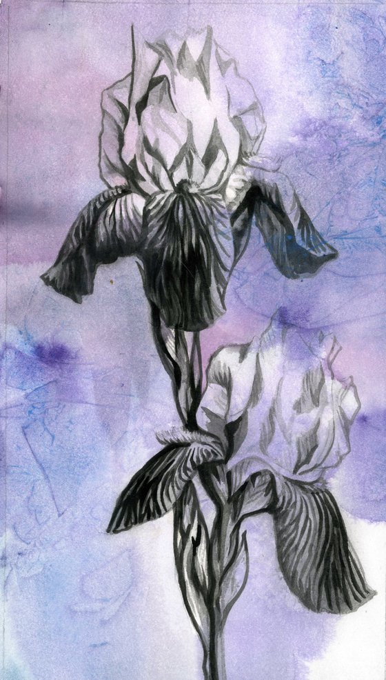 iris brush drawing