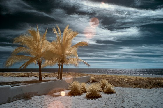 Palmeras, Playa Delfín, Oaxaca.
