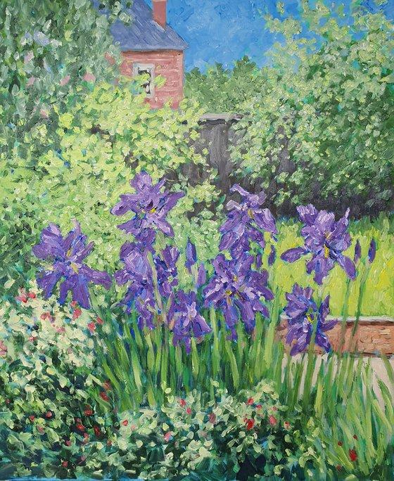 Irises  #4