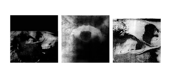 Skull triptych #4