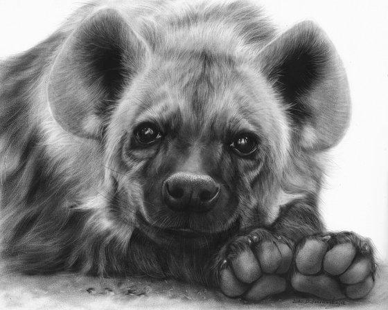 Adorable Hyena