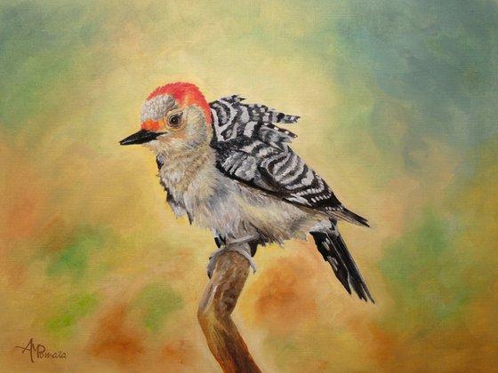 Pretty Woodpecker