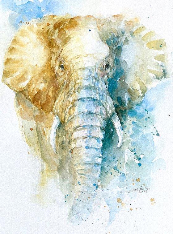 Bono the Elephant