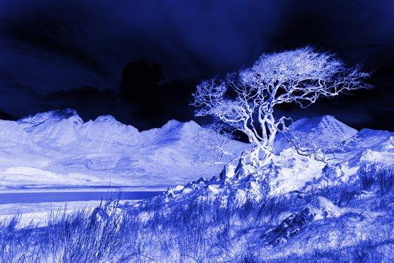 Ghost Tree Blue