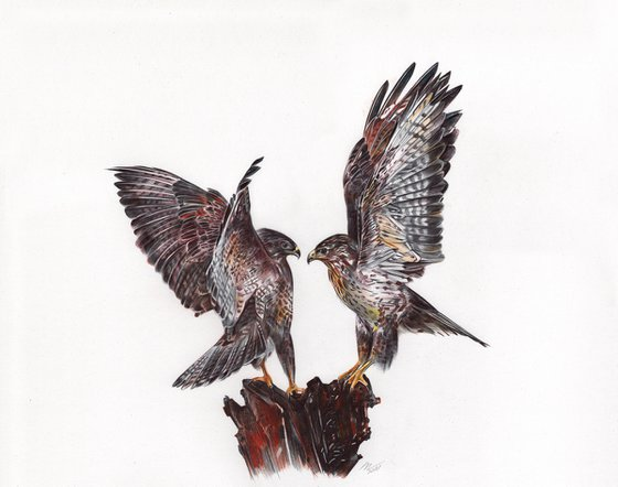New Zealand Falcon (Ballpoint Pen Drawing)