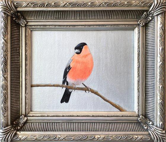 Mister Bullfinch